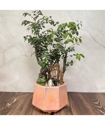 Sandalwood Bonsai with Buddha