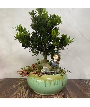Pordorcarpus Bonsai