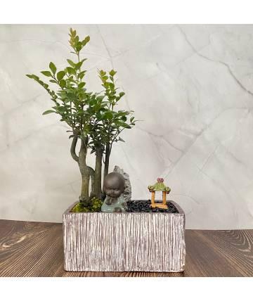 Sandalwood Bonsai Serenity
