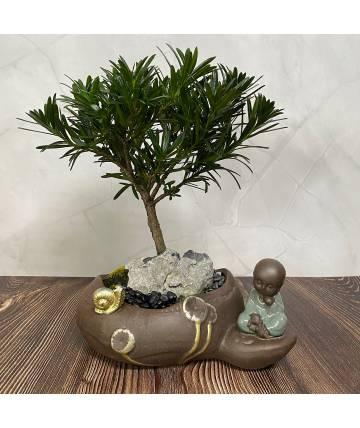 Buddhist Pine (Podocarpus) with Buddha