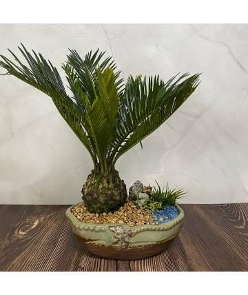 Cycas Palm Bonsai